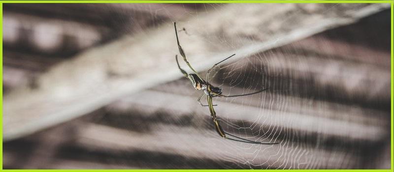 Spider Control Palm Beach