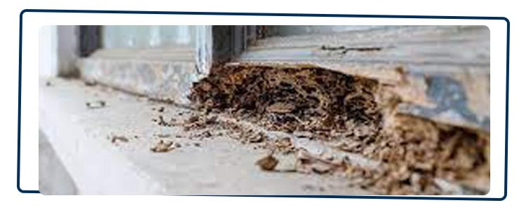 Termite Control Palm Beach